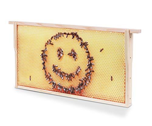 Bienenwaben-Bild