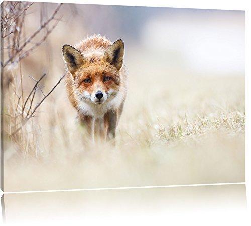 Fuchs-Leinwandbild
