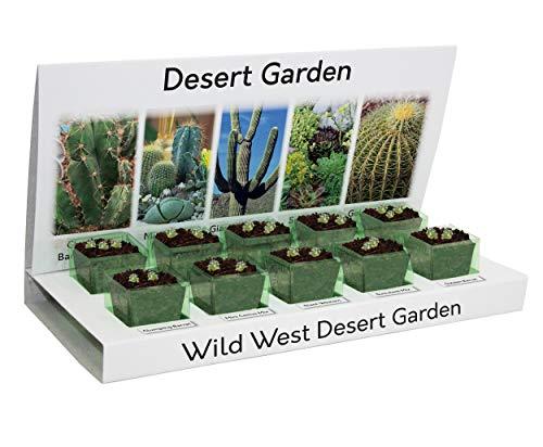 Grow Your Own Desert Garden