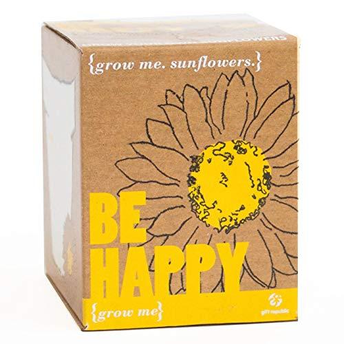 Sonnenblume-Anzuchtset